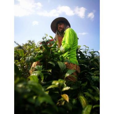 Čaj oolong Yabukita Thajsko 50g