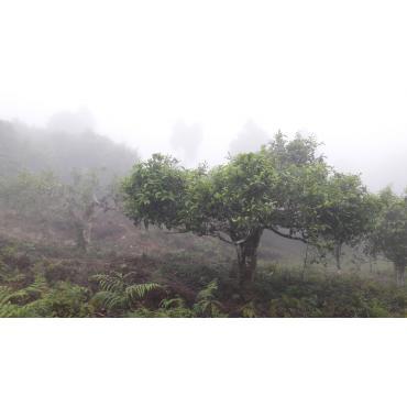 Zöld tea Dvabzu Georgia 50g