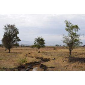 Nordbeans Ethiopia Keramo natural 200g
