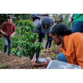 Nordbeans Etiópia Shantawene méz 200g