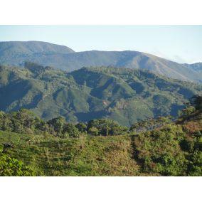 Kostarika: Tarrazu, zrnková...